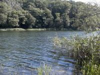 Działki rekreacyjne blisko jeziora.